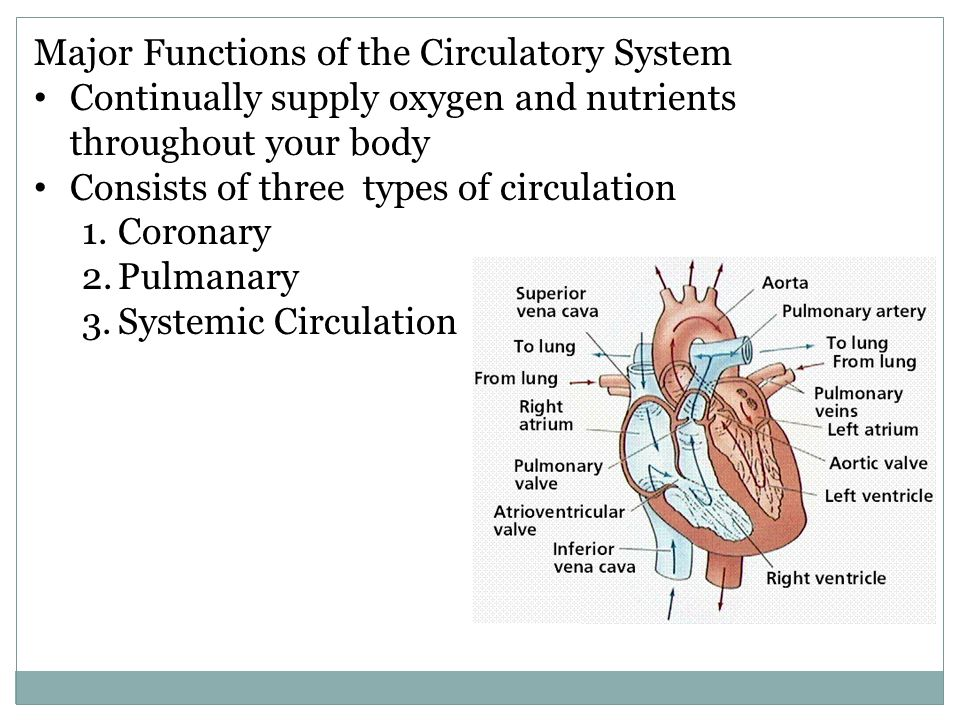 Major Functions of the Circulatory System