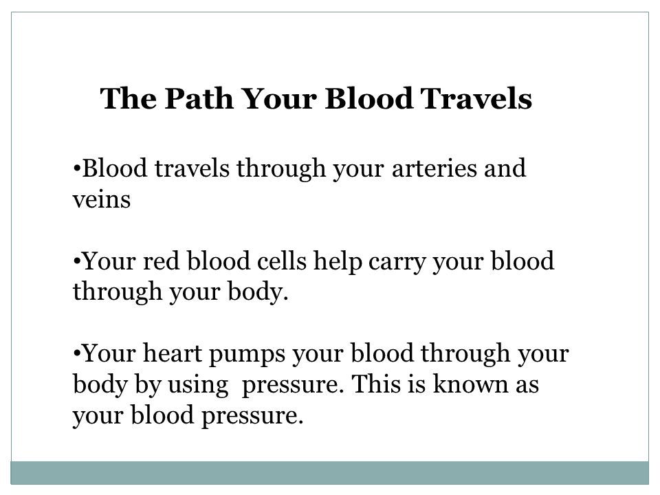 The Path Your Blood Travels