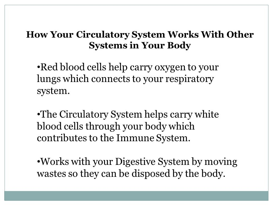 How Your Circulatory System Works With Other Systems in Your Body