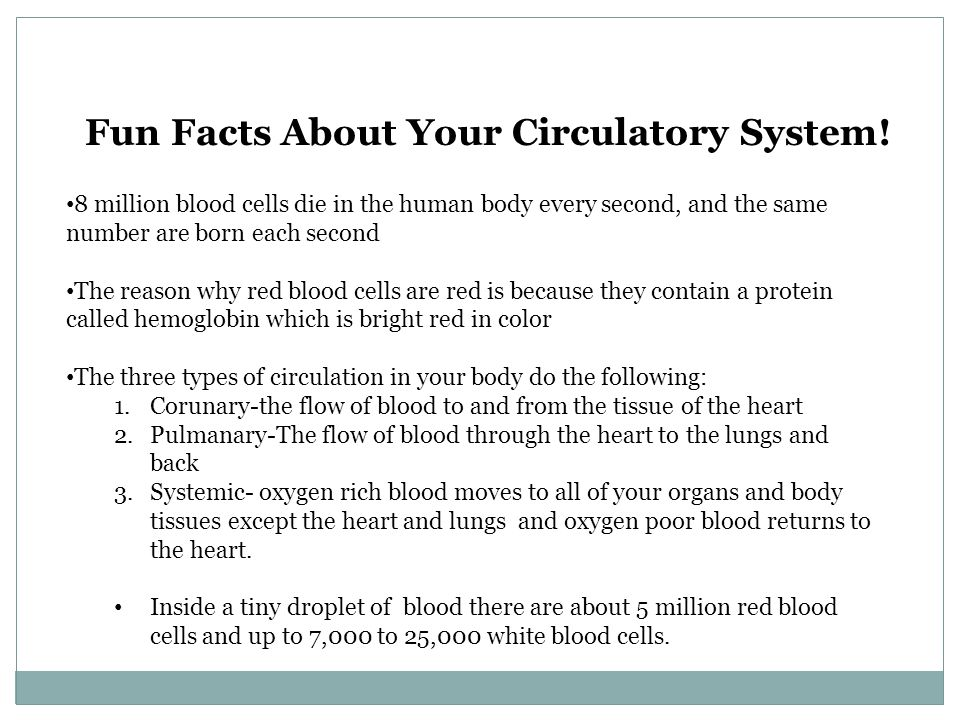 Fun Facts About Your Circulatory System!