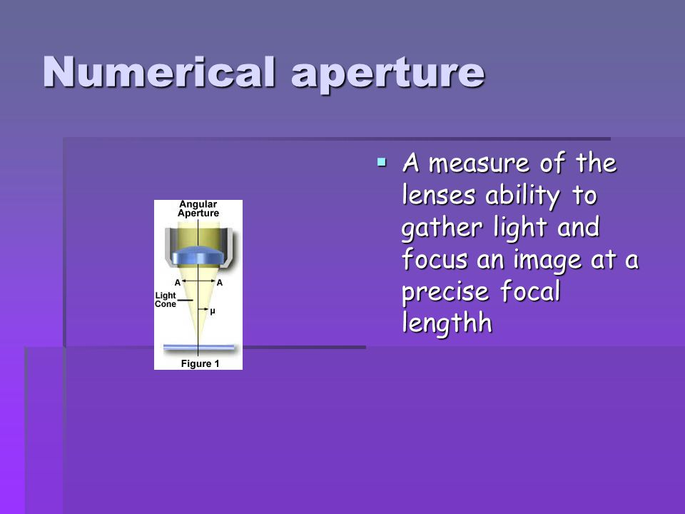 Numerical aperture A measure of the lenses ability to gather light and focus an image at a precise focal lengthh.