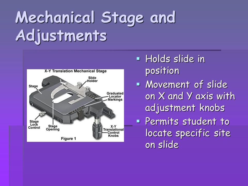 Mechanical Stage and Adjustments
