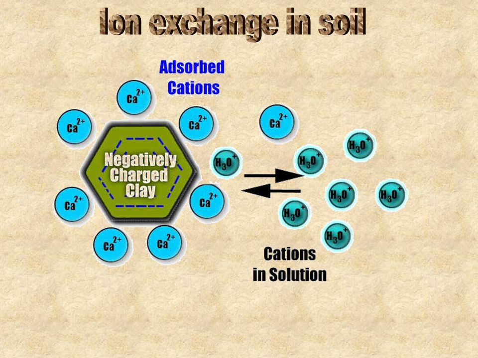 Ion exchange in soil