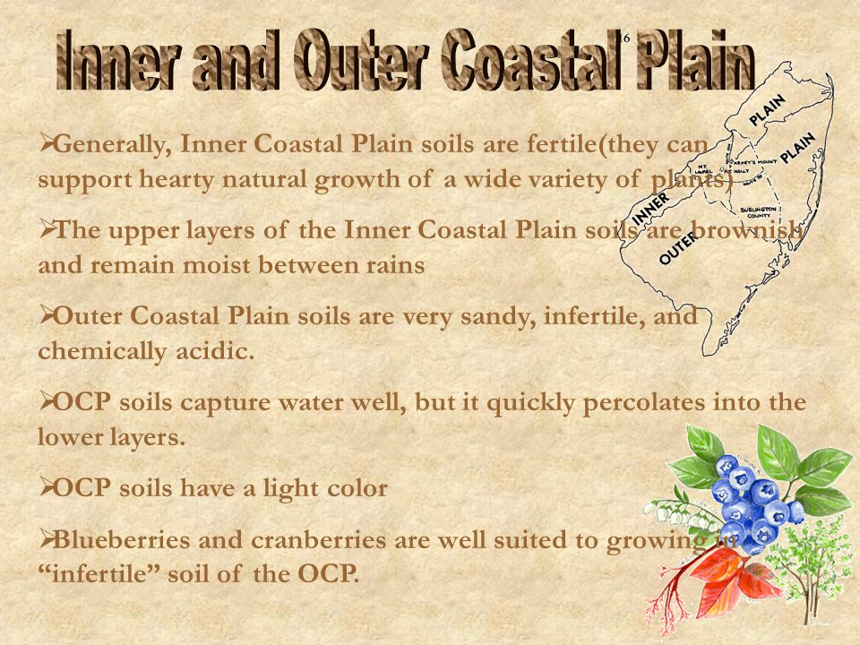 Inner and Outer Coastal Plain