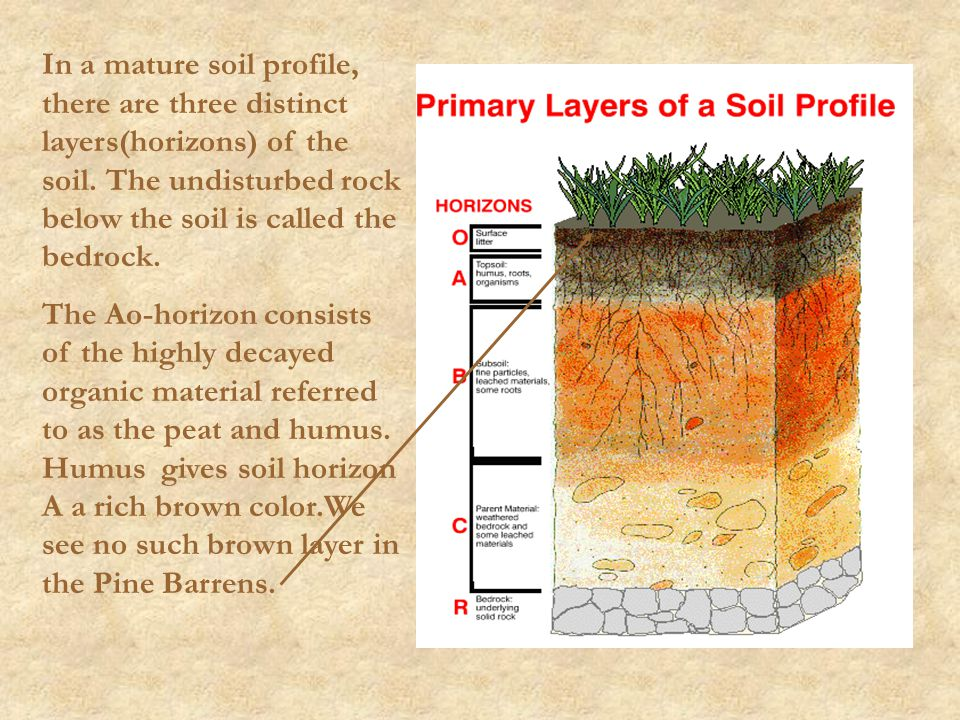 In a mature soil profile, there are three distinct layers(horizons) of the soil. The undisturbed rock below the soil is called the bedrock.