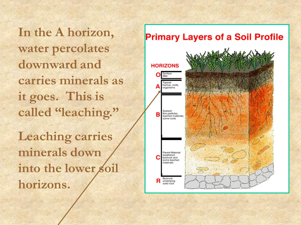 In the A horizon, water percolates downward and carries minerals as it goes. This is called leaching.