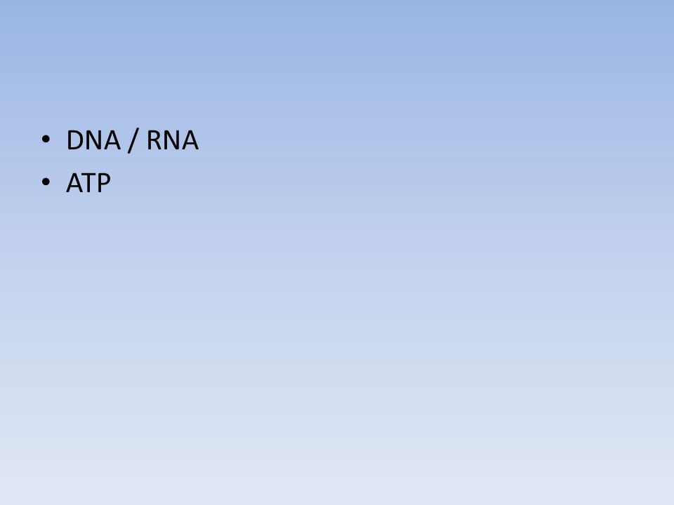 DNA / RNA ATP