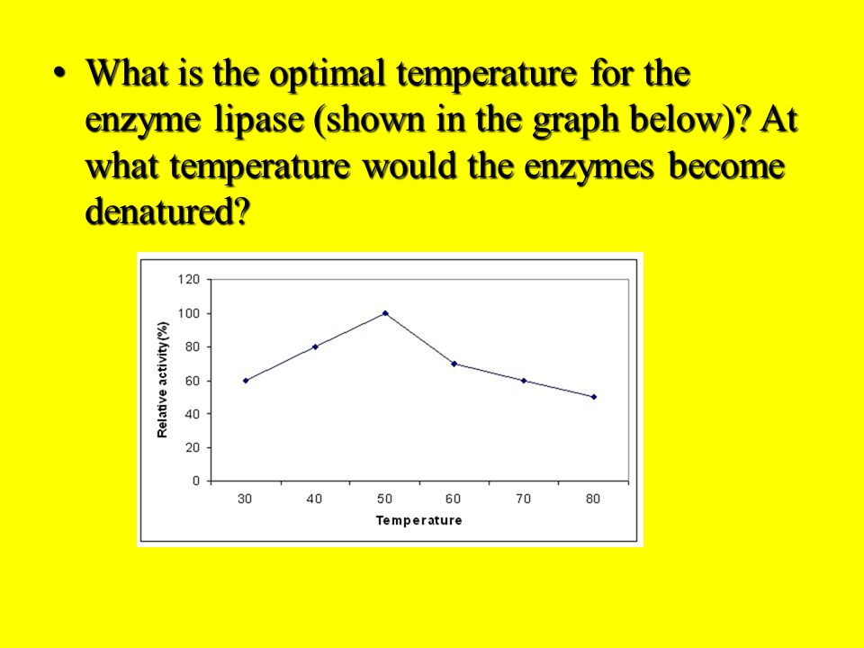 What is the optimal temperature for the enzyme lipase (shown in the graph below).