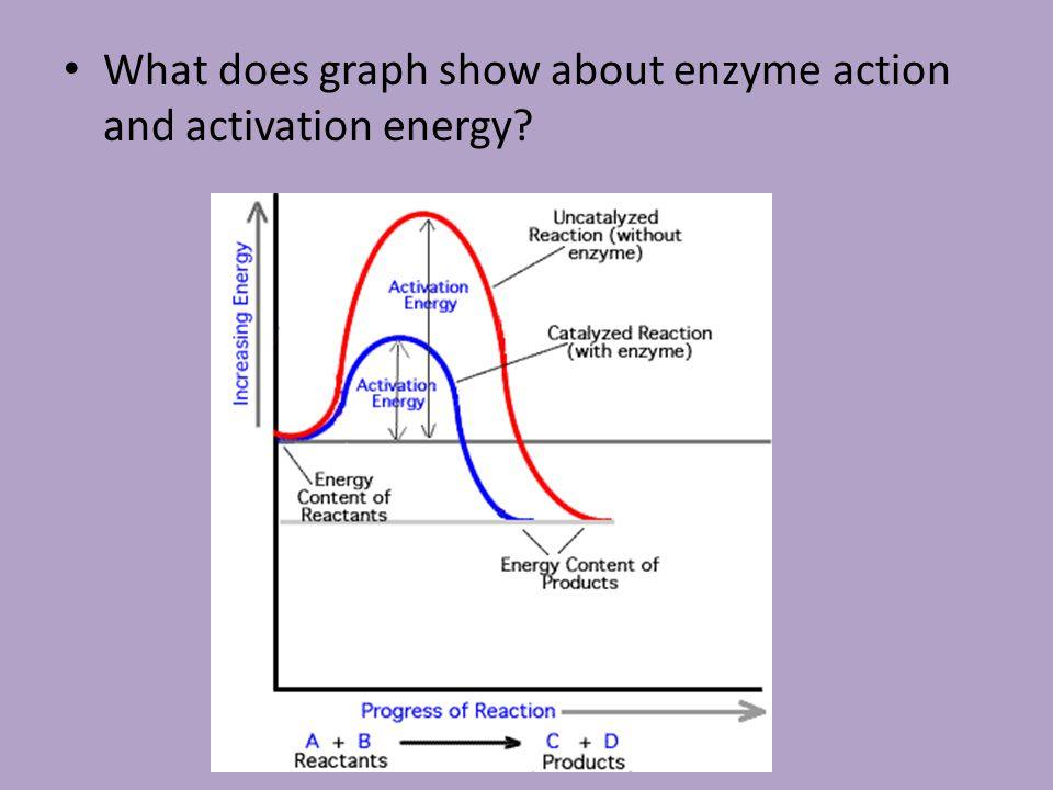 What does graph show about enzyme action and activation energy