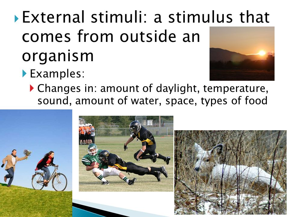 External stimuli: a stimulus that comes from outside an organism