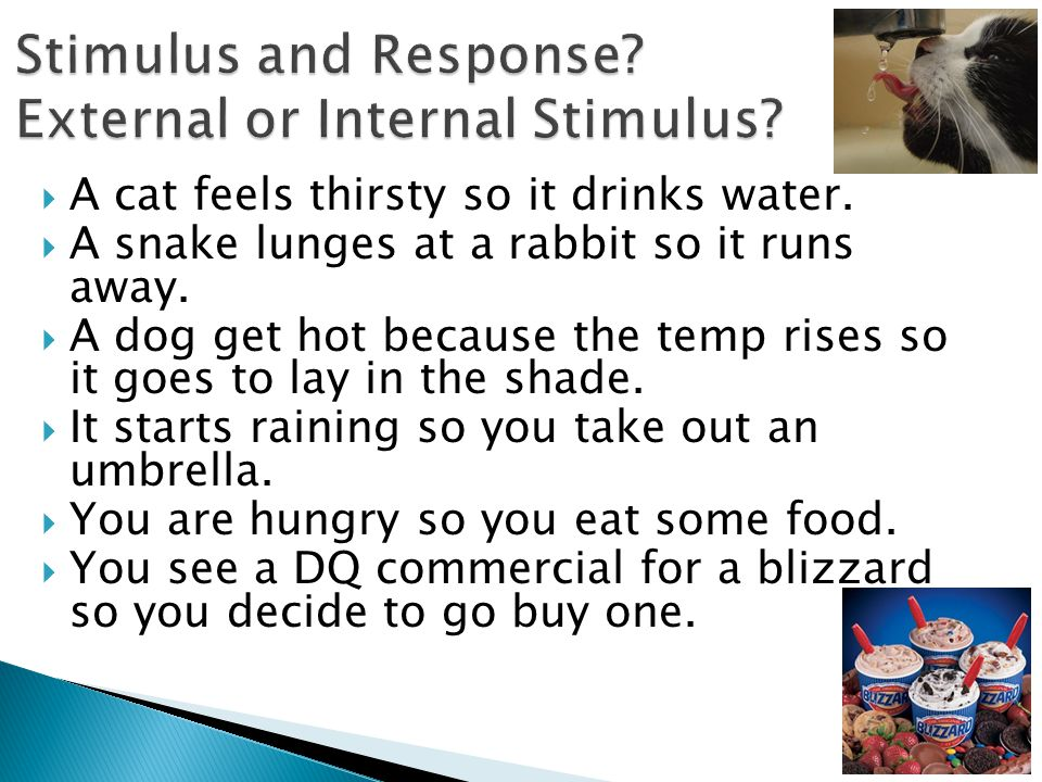 Stimulus and Response External or Internal Stimulus