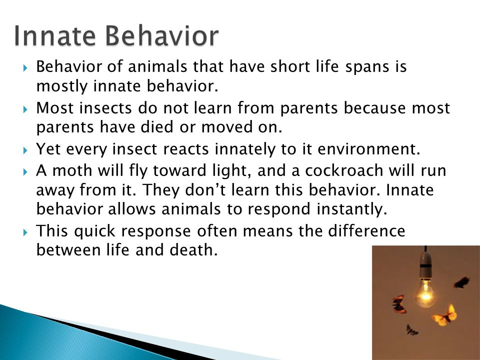 Innate Behavior Behavior of animals that have short life spans is mostly innate behavior.