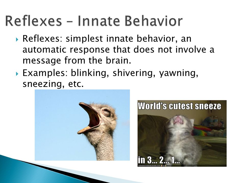 Reflexes – Innate Behavior