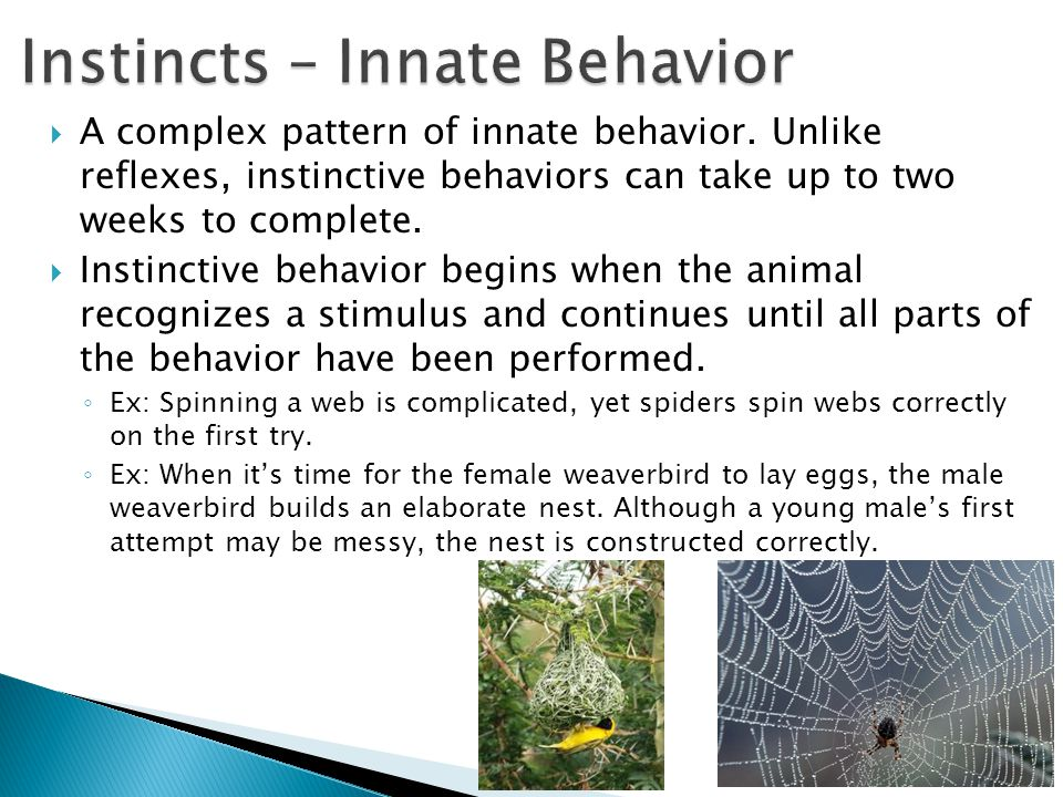 Instincts – Innate Behavior