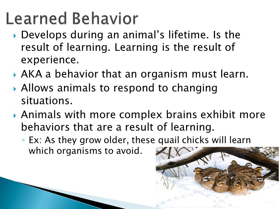 Learned Behavior Develops during an animal's lifetime. Is the result of learning. Learning is the result of experience.