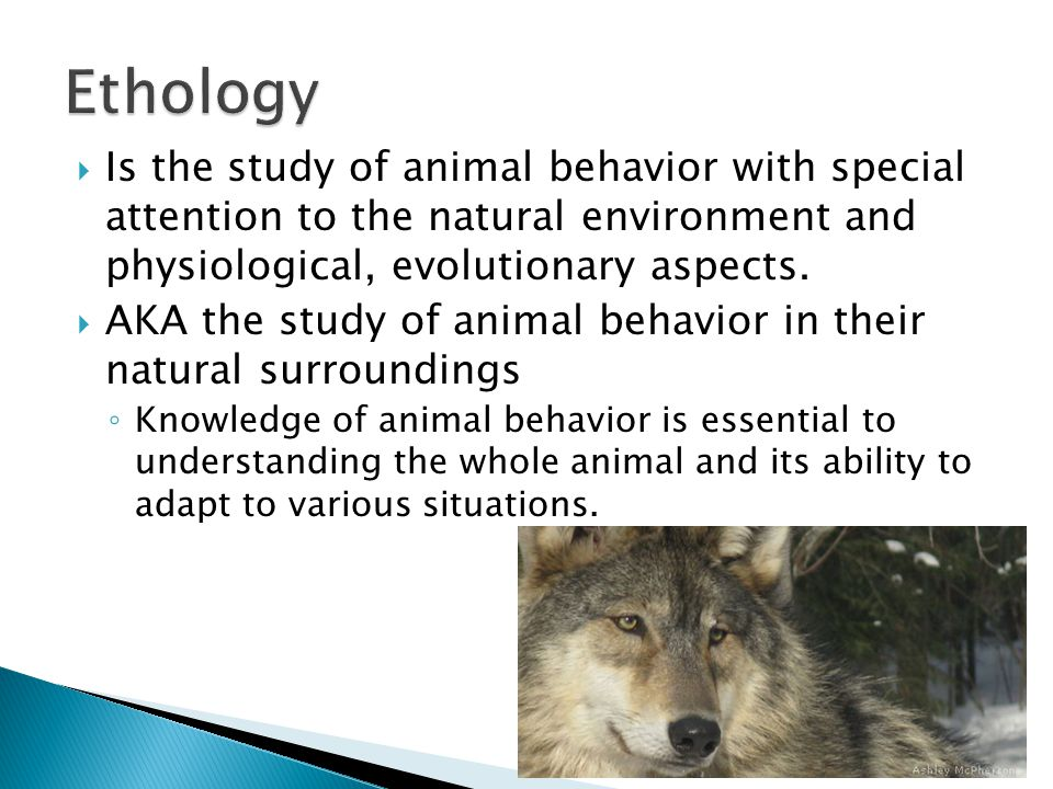 Ethology: The Study of Animal Behavior - PetPlace