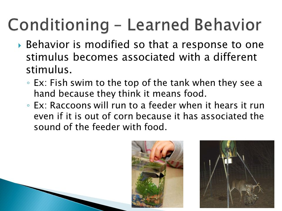 Conditioning – Learned Behavior