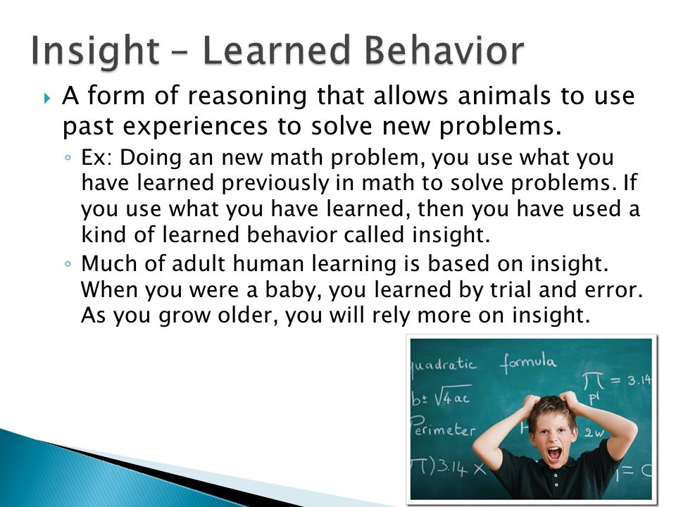 Insight – Learned Behavior