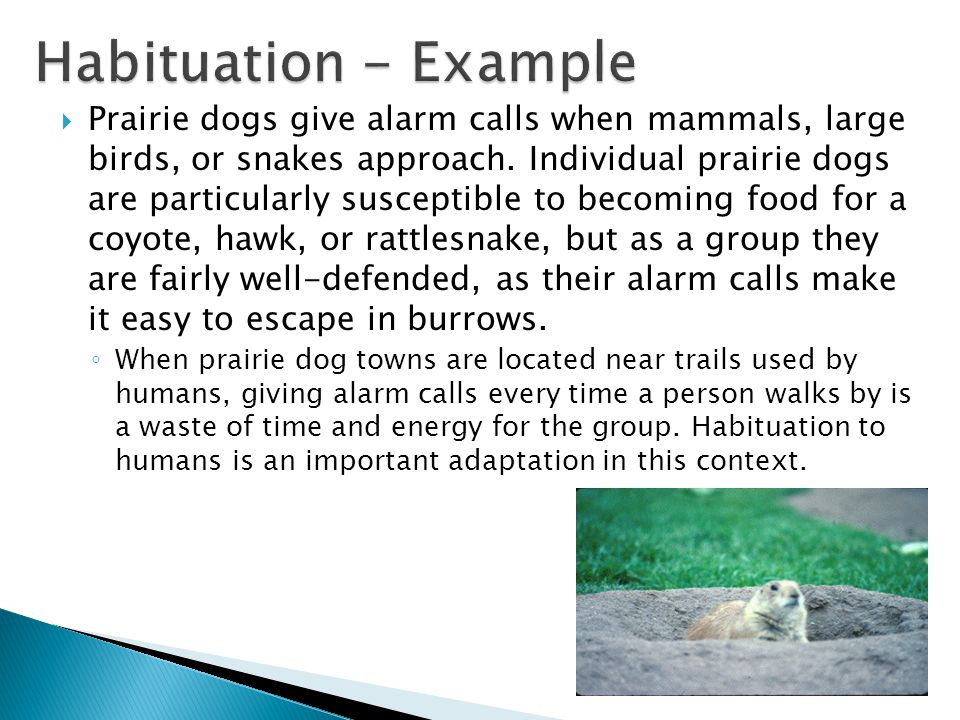 Habituation - Example