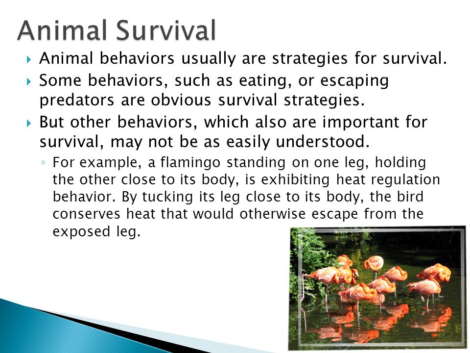 Animal Survival Animal behaviors usually are strategies for survival.