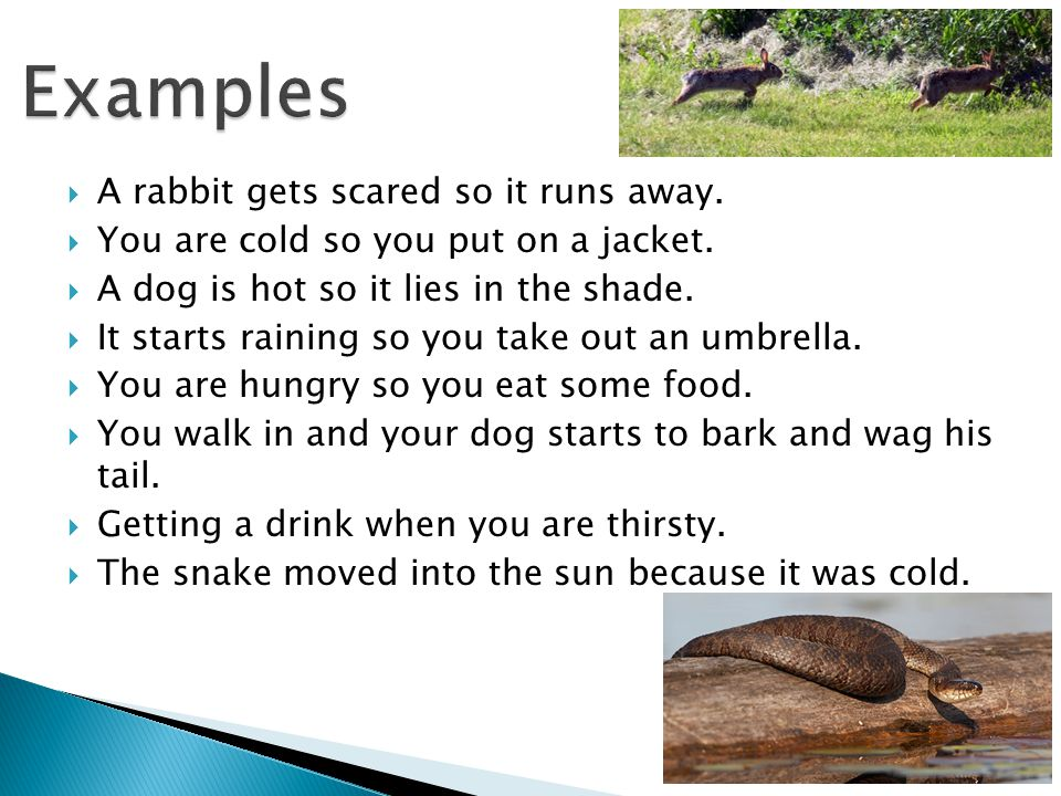 Examples A rabbit gets scared so it runs away.