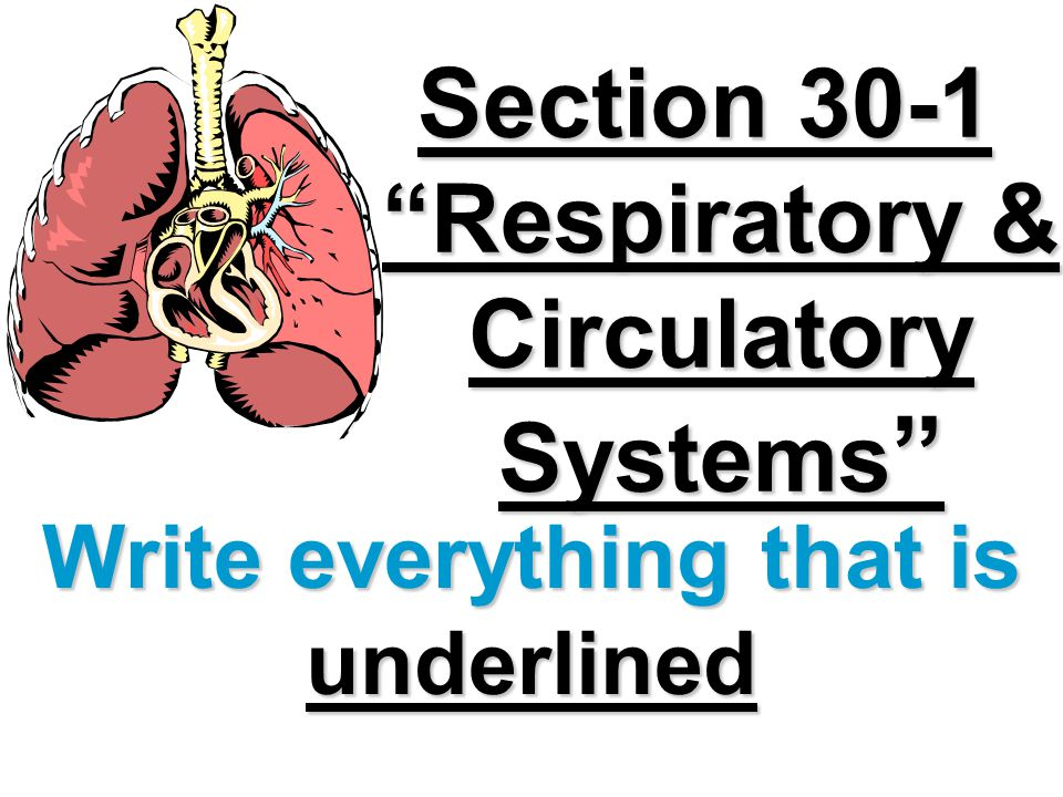 Section 30-1 Respiratory & Circulatory Systems