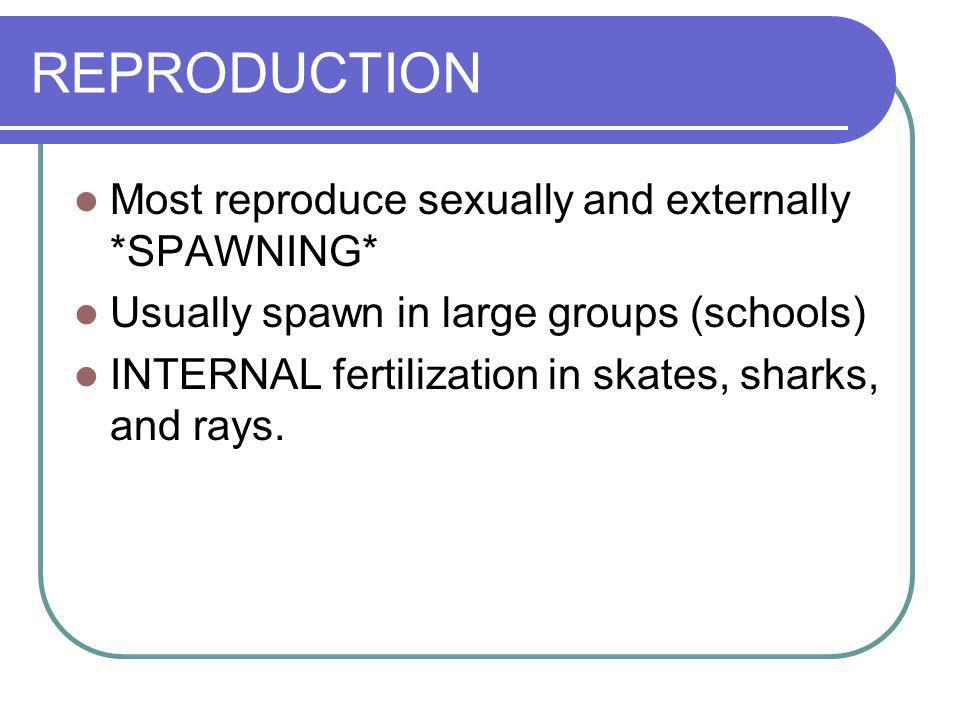 REPRODUCTION Most reproduce sexually and externally *SPAWNING*