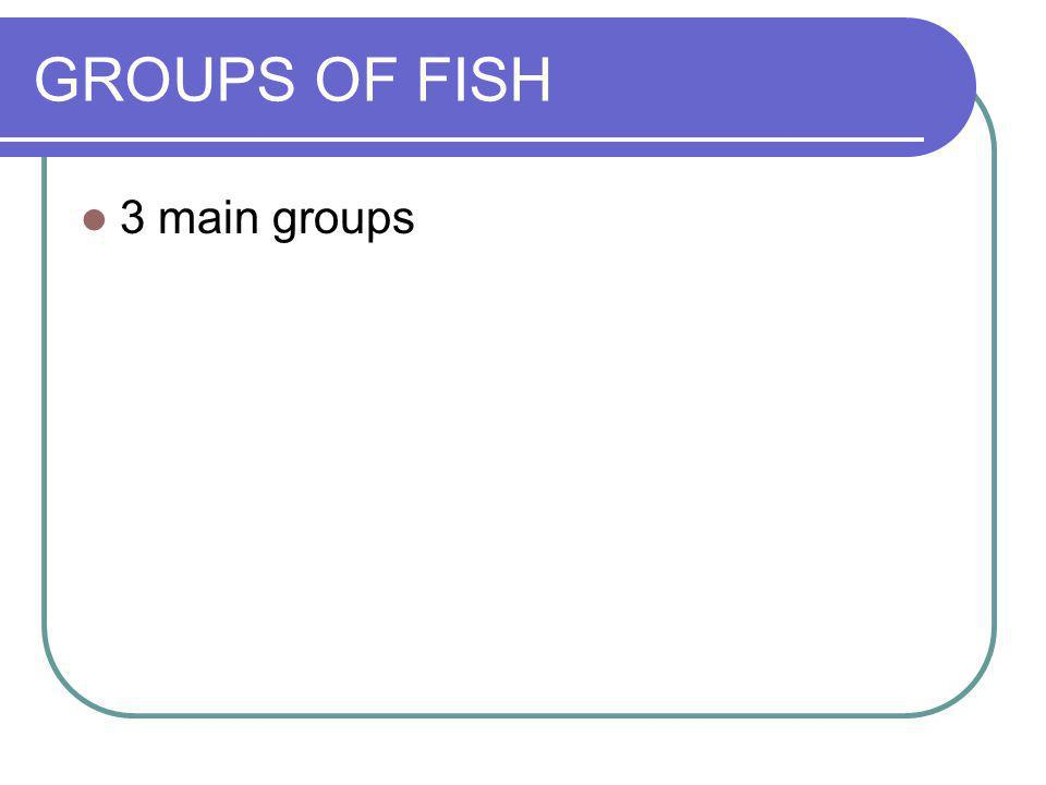GROUPS OF FISH 3 main groups