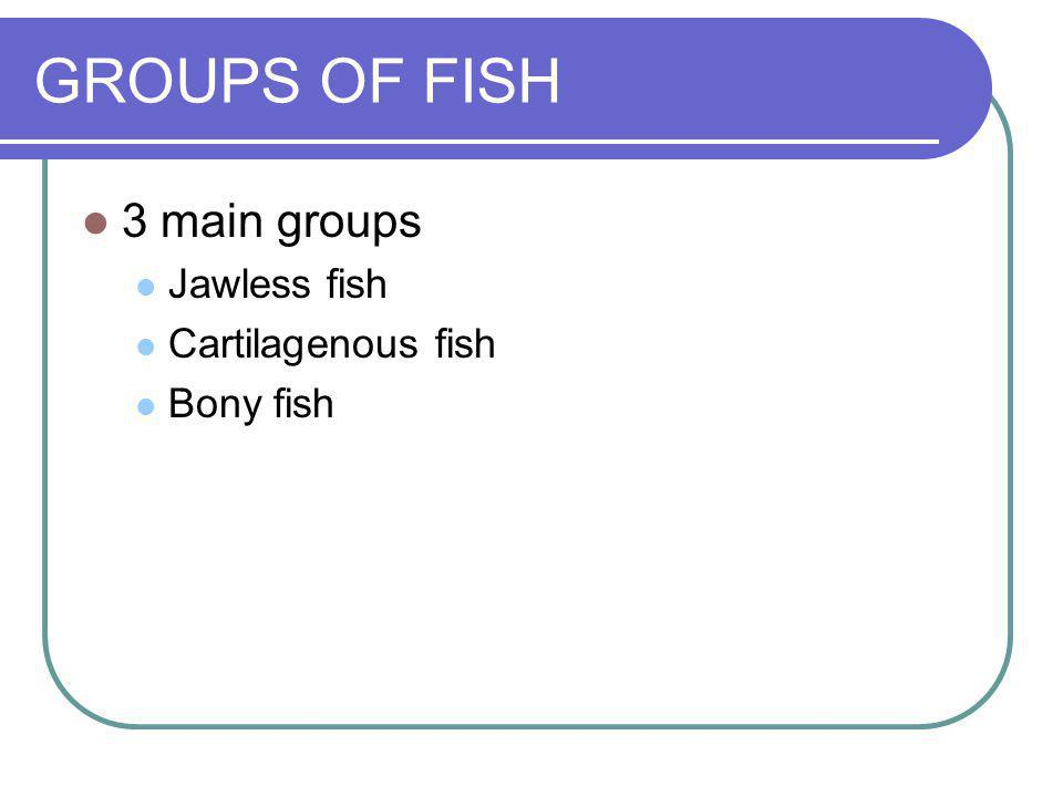 GROUPS OF FISH 3 main groups Jawless fish Cartilagenous fish Bony fish