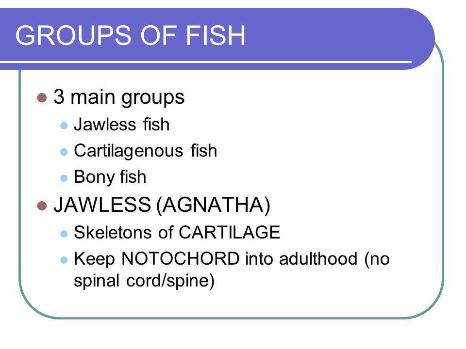 GROUPS OF FISH 3 main groups JAWLESS (AGNATHA) Jawless fish