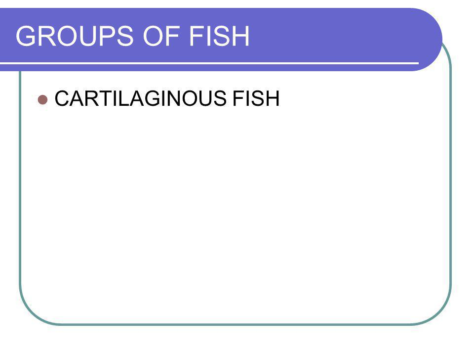 GROUPS OF FISH CARTILAGINOUS FISH