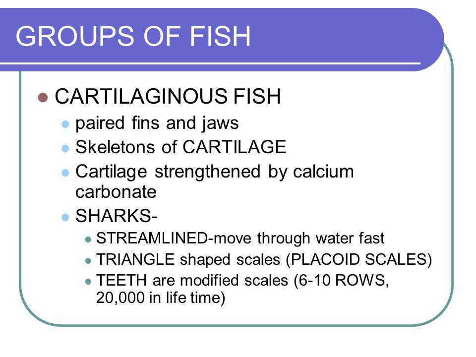 GROUPS OF FISH CARTILAGINOUS FISH paired fins and jaws