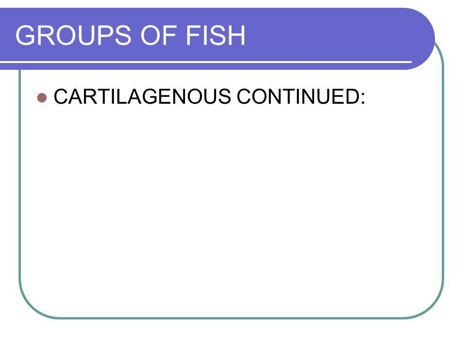 GROUPS OF FISH CARTILAGENOUS CONTINUED: