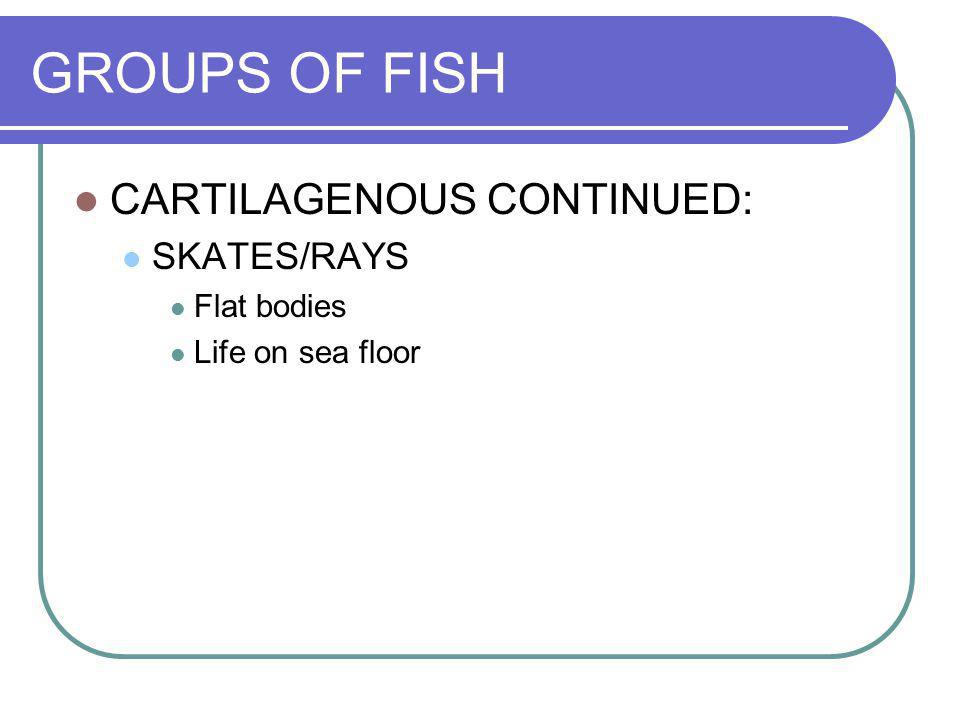 GROUPS OF FISH CARTILAGENOUS CONTINUED: SKATES/RAYS Flat bodies