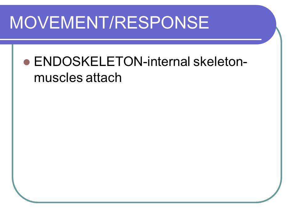 MOVEMENT/RESPONSE ENDOSKELETON-internal skeleton-muscles attach