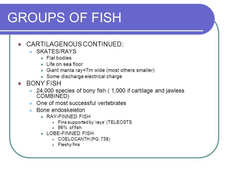 GROUPS OF FISH CARTILAGENOUS CONTINUED: BONY FISH SKATES/RAYS