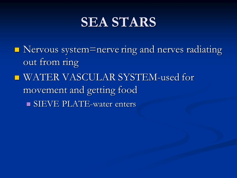 SEA STARS Nervous system=nerve ring and nerves radiating out from ring
