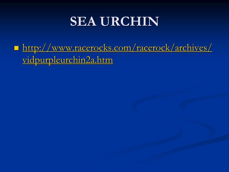 SEA URCHIN http://www.racerocks.com/racerock/archives/vidpurpleurchin2a.htm