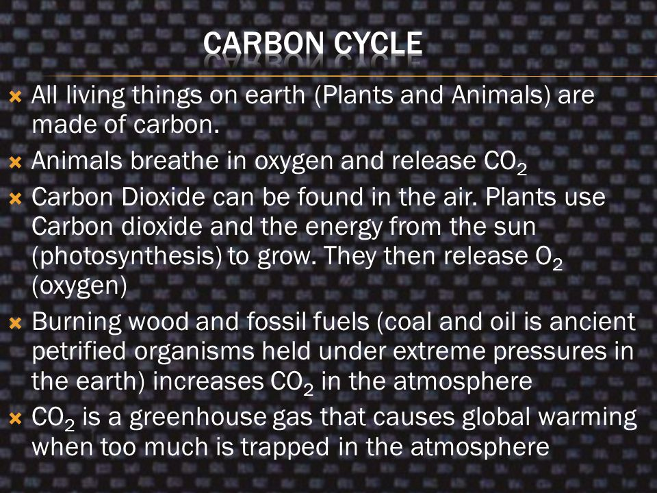 Carbon Cycle All living things on earth (Plants and Animals) are made of carbon. Animals breathe in oxygen and release CO2.