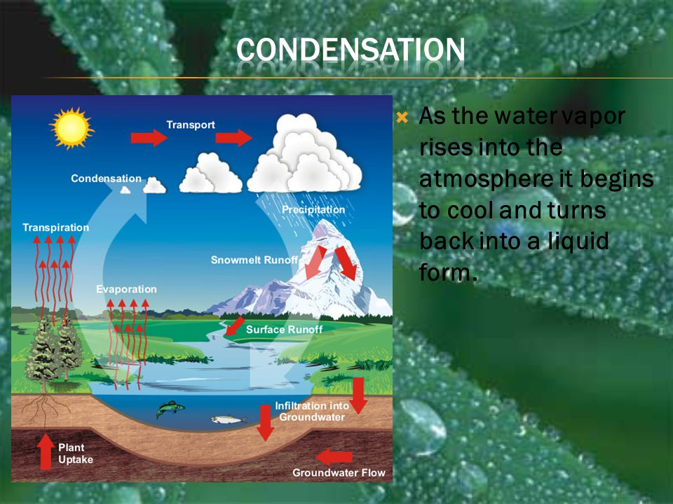 Condensation As the water vapor rises into the atmosphere it begins to cool and turns back into a liquid form.