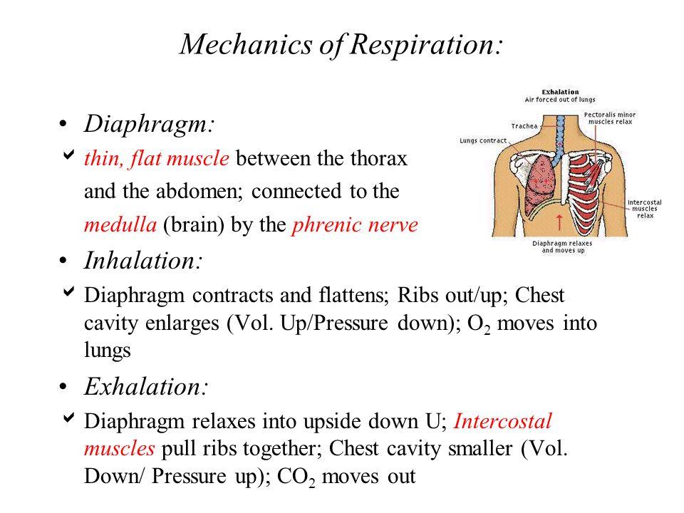 Mechanics of Respiration: