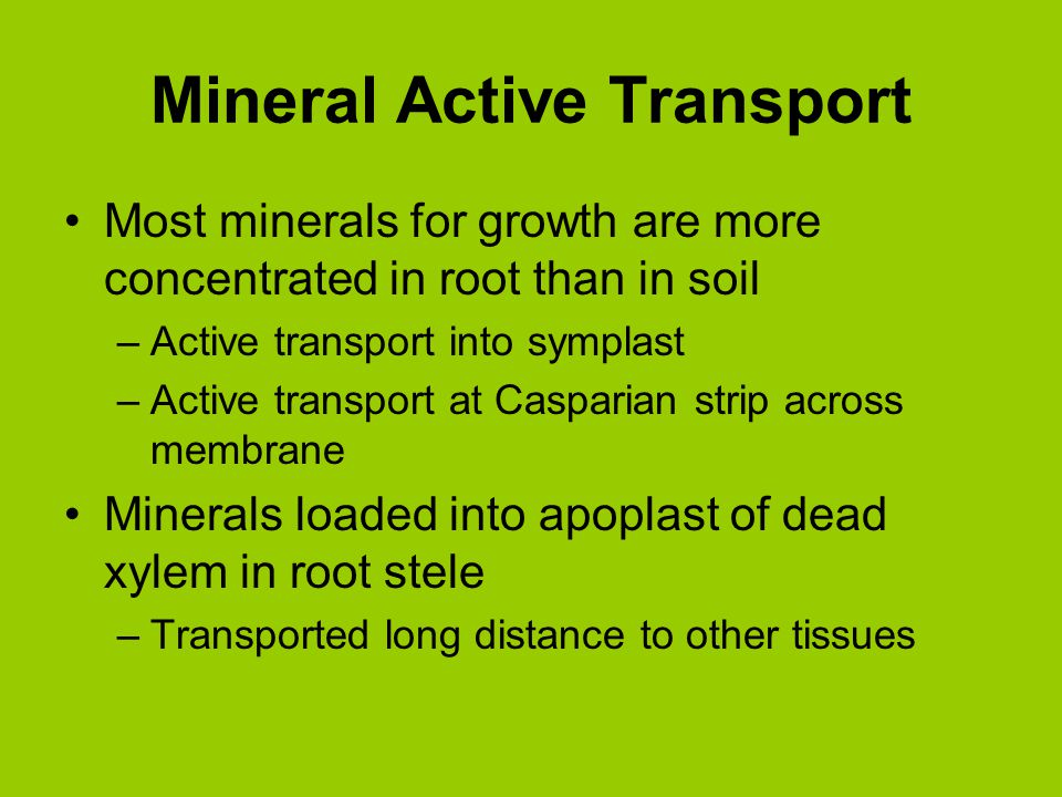 Mineral Active Transport