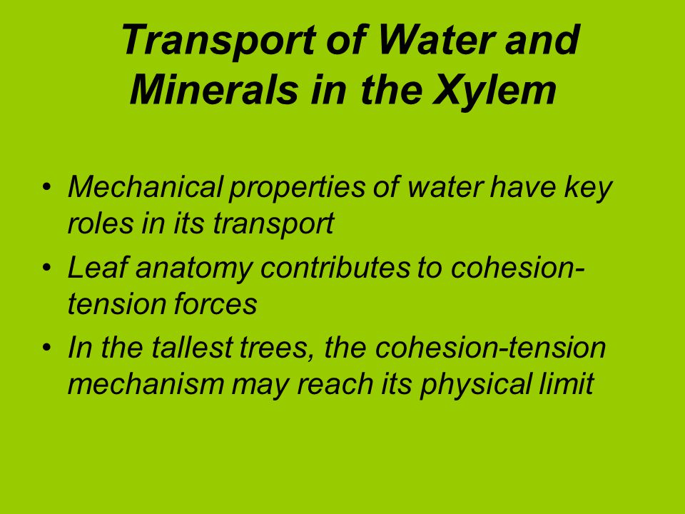 Transport of Water and Minerals in the Xylem