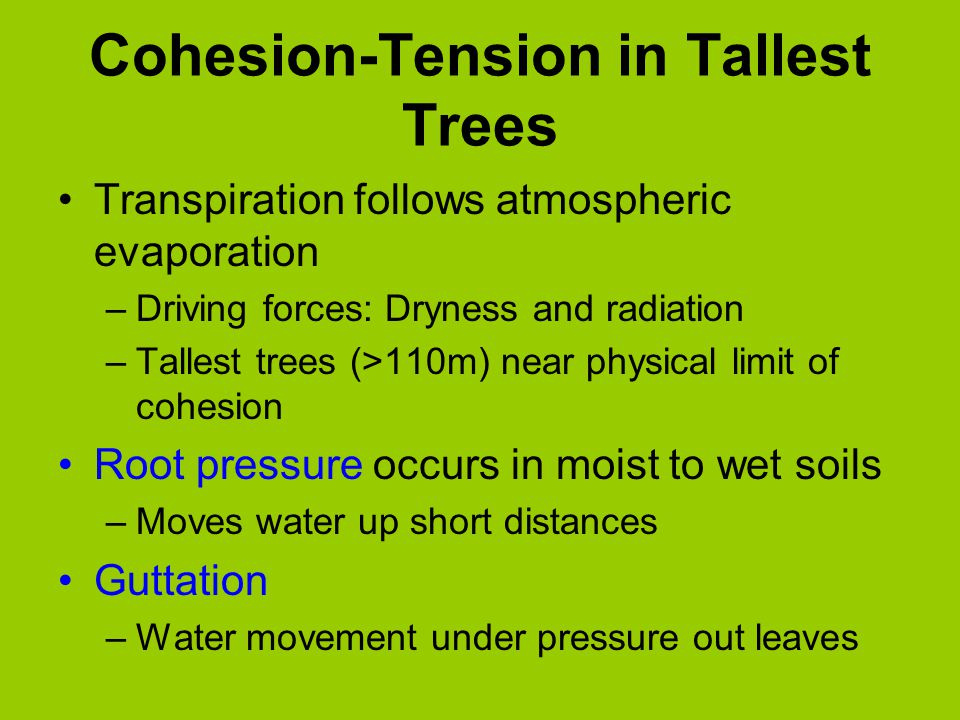 Cohesion-Tension in Tallest Trees