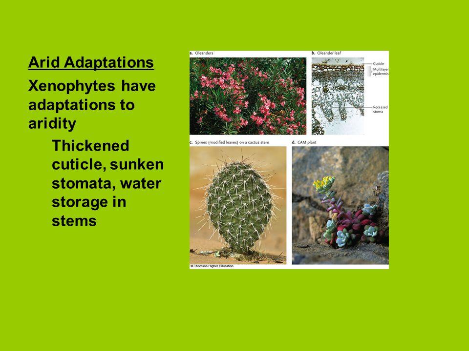 Arid Adaptations Xenophytes have adaptations to aridity.