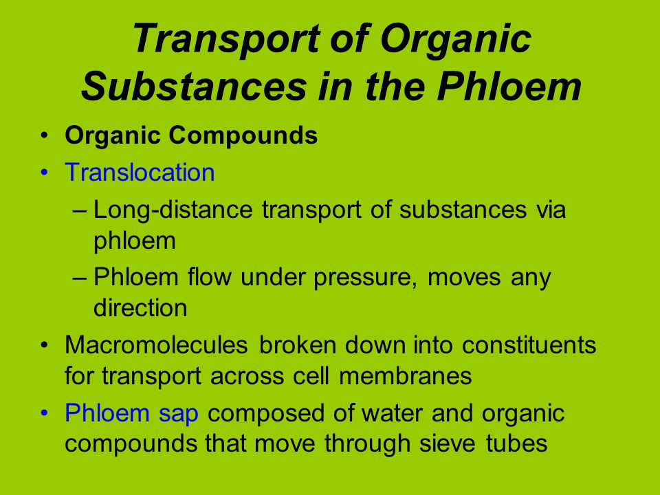 Transport of Organic Substances in the Phloem