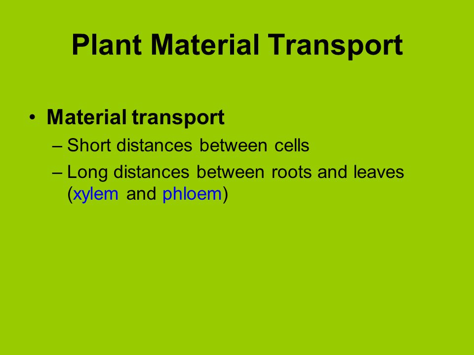 Plant Material Transport