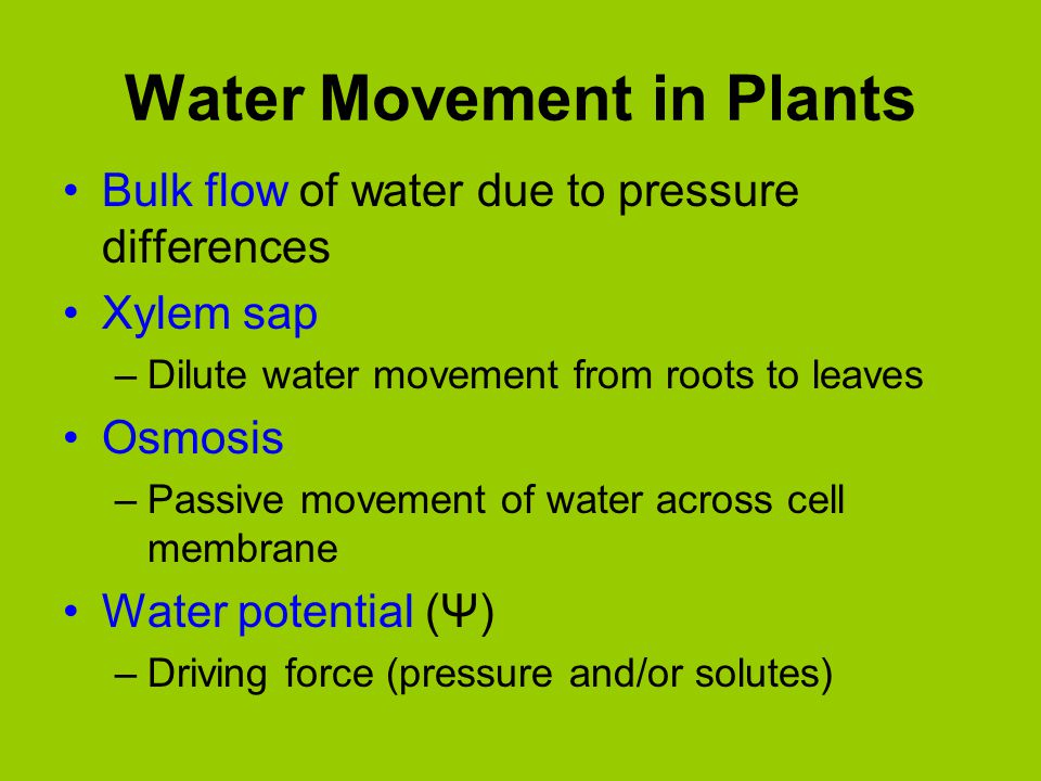 water movement in plants I - water uptake by plants - j e fernández, b e clothier the understanding of water movement in the soil-plant system, and the newest theories.