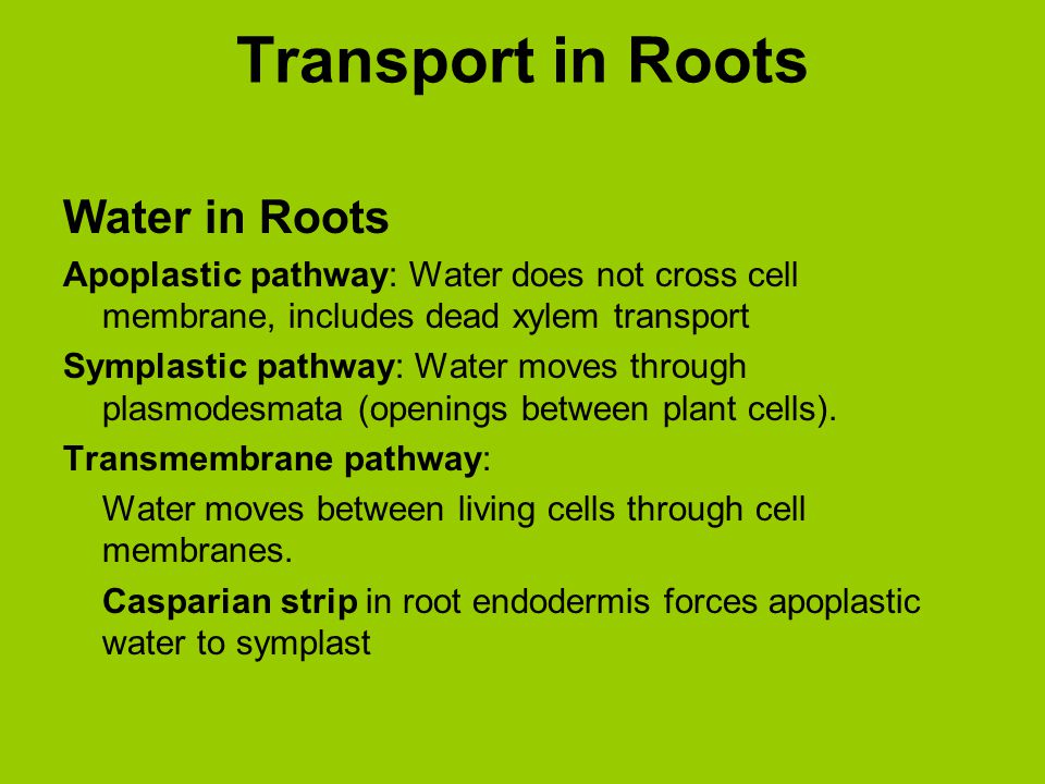 Transport in Roots Water in Roots