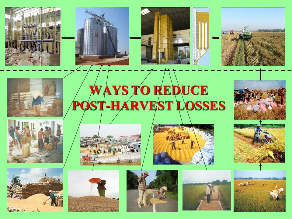 WAYS TO REDUCE POST-HARVEST LOSSES